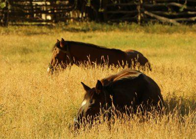 Equestrian_Trips_SenderosPatagonia_Avellano05